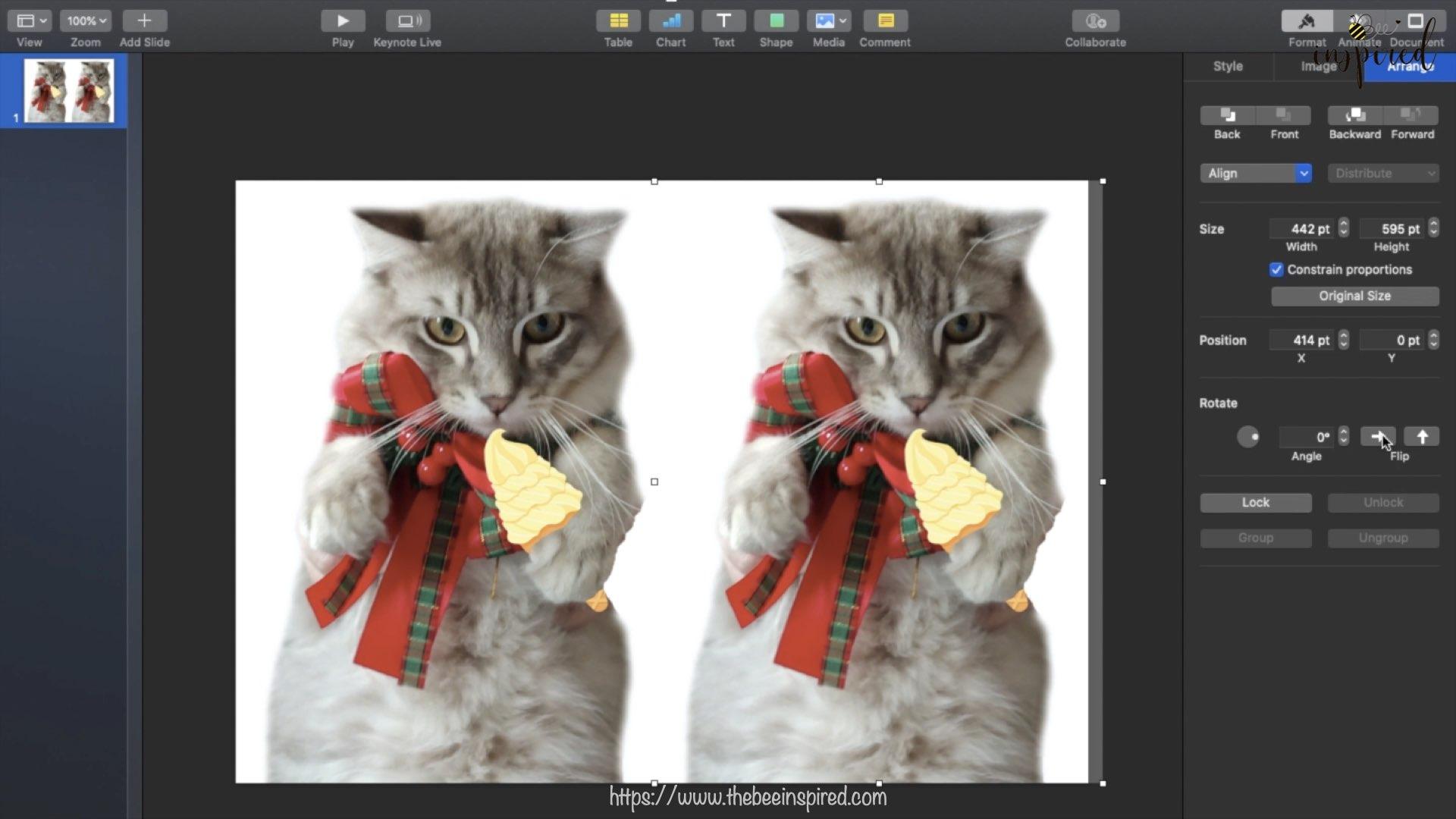 Cat Pillow-Website Pics.001-2